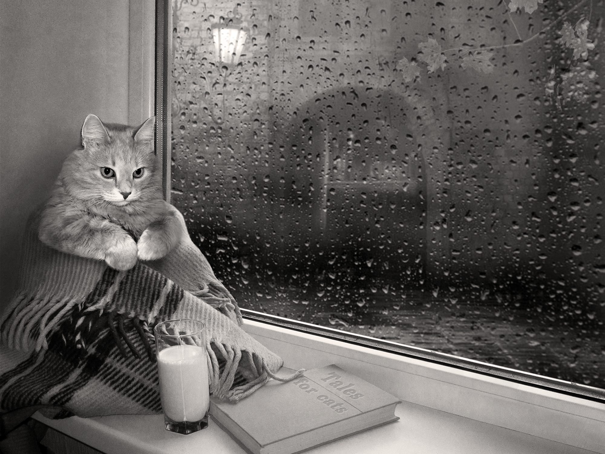 By a rainy day window, a cat sits wrapped in a blanket and staring at nothing., apparently not being productive.