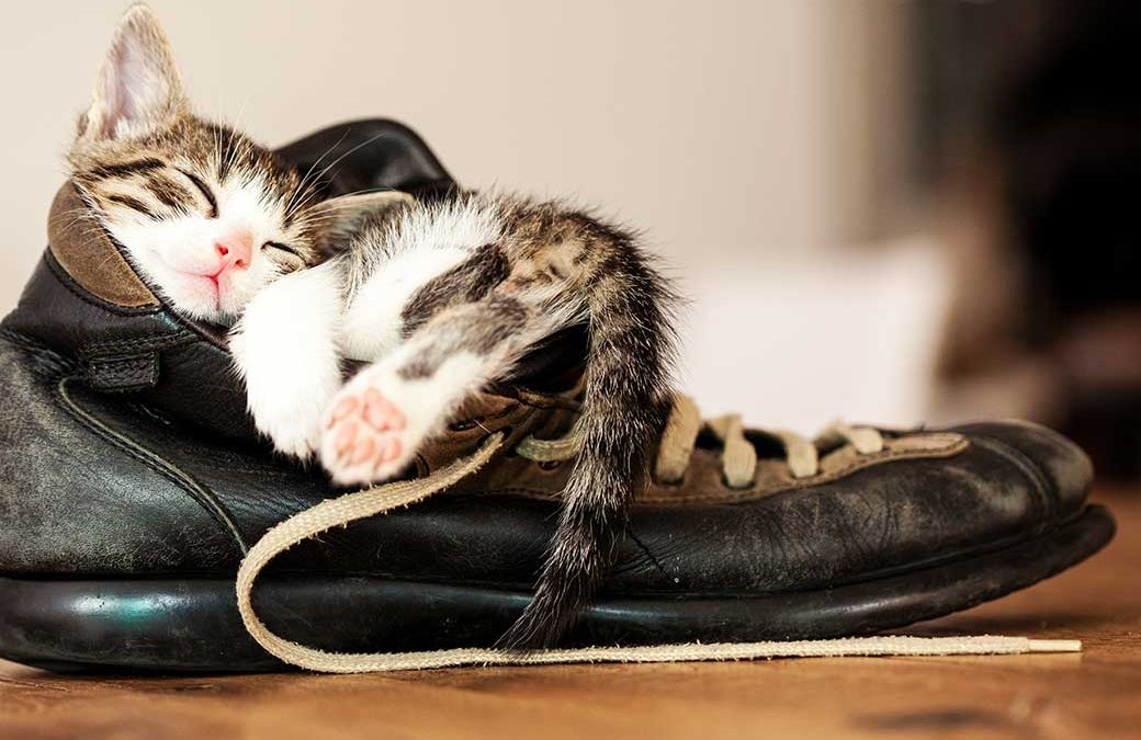 bi-color-tabby kitten sleeping in old boot